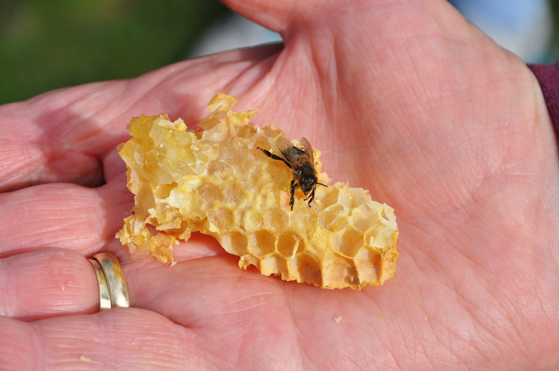 מפגשי דבורים במרכז פרופוליס במוסללה